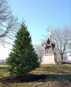 milford Christmas Tree Just Planted